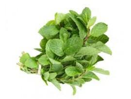 Pudina ( Mint )